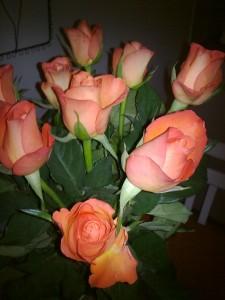 Orange rosor fick jag av Jonathan