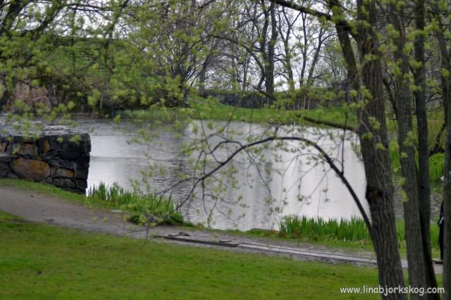 De små insjöarna som bildats av bombningar under kriget fylldes av små, små ringar på vattenytan när det började regna.