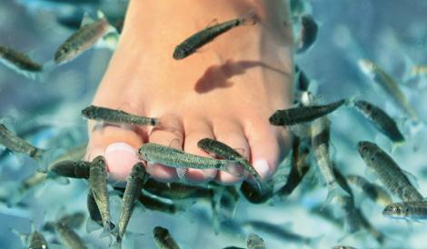 Bloggtävling: prova på fiskpedikyr