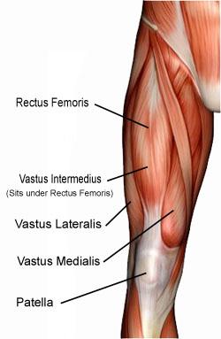 fakta om muskler