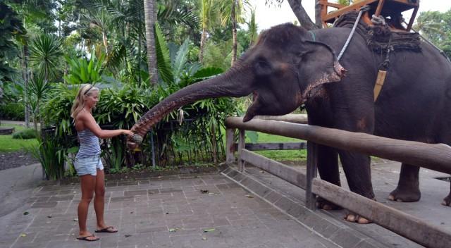 Bali Zoo mata elefant