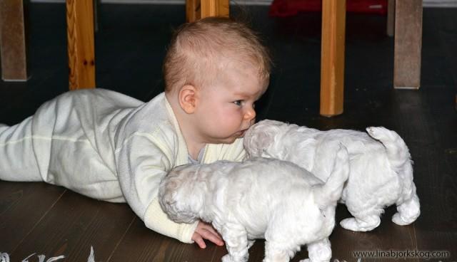 babyhundvalp