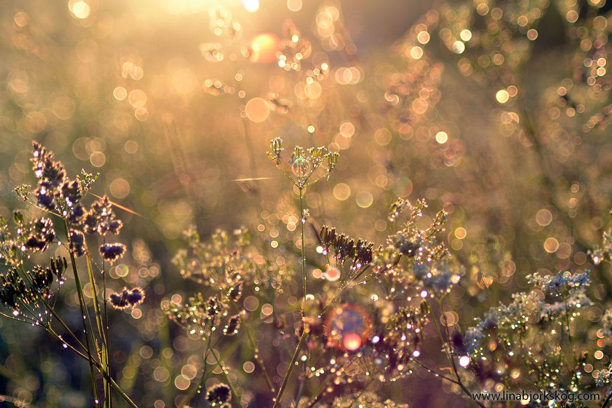 blomster sommar