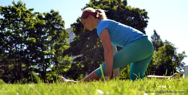 stretchgräset