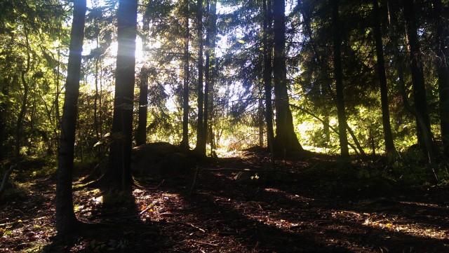 Löpning skogsstig