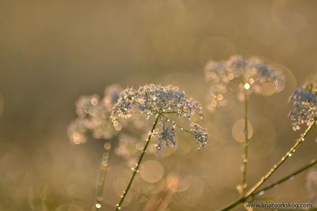 blomster5