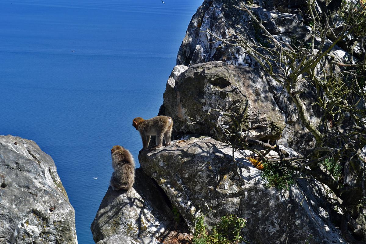 Fina vyer och närgångna apor på Gibraltar