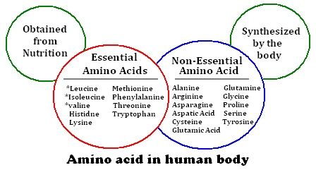 essentiella proteiner