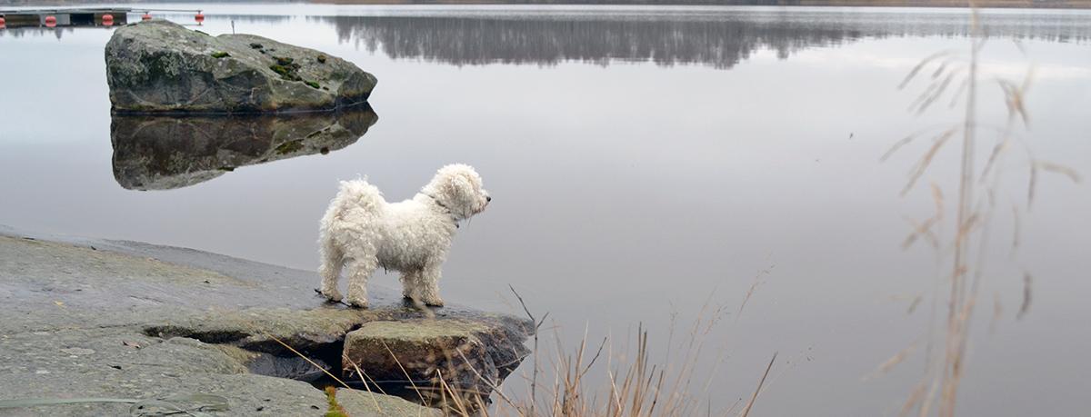 Hundpromenad på lunchpausen