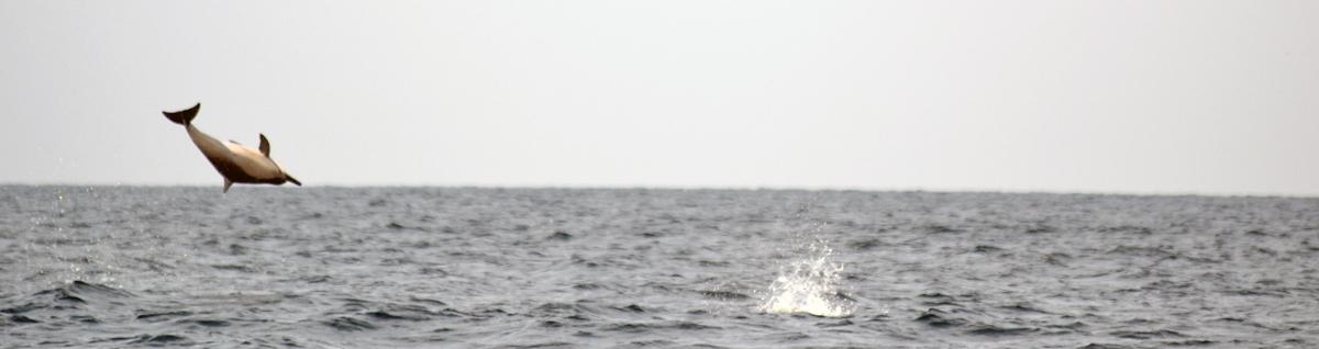 Vilda delfiner på nära håll