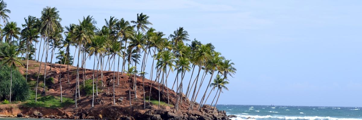 Från Hikkaduwa till Mirissa i jakt på surf och sol