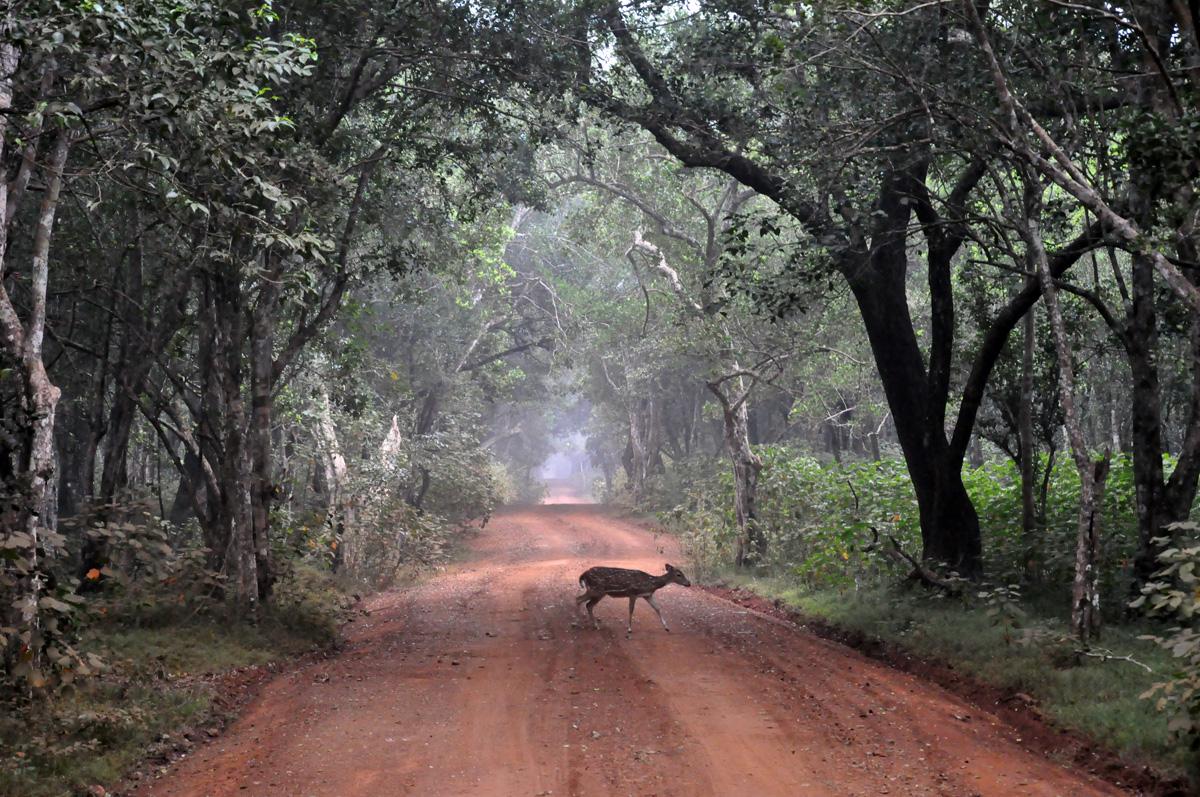 wilpattu nationalpark sri lanka