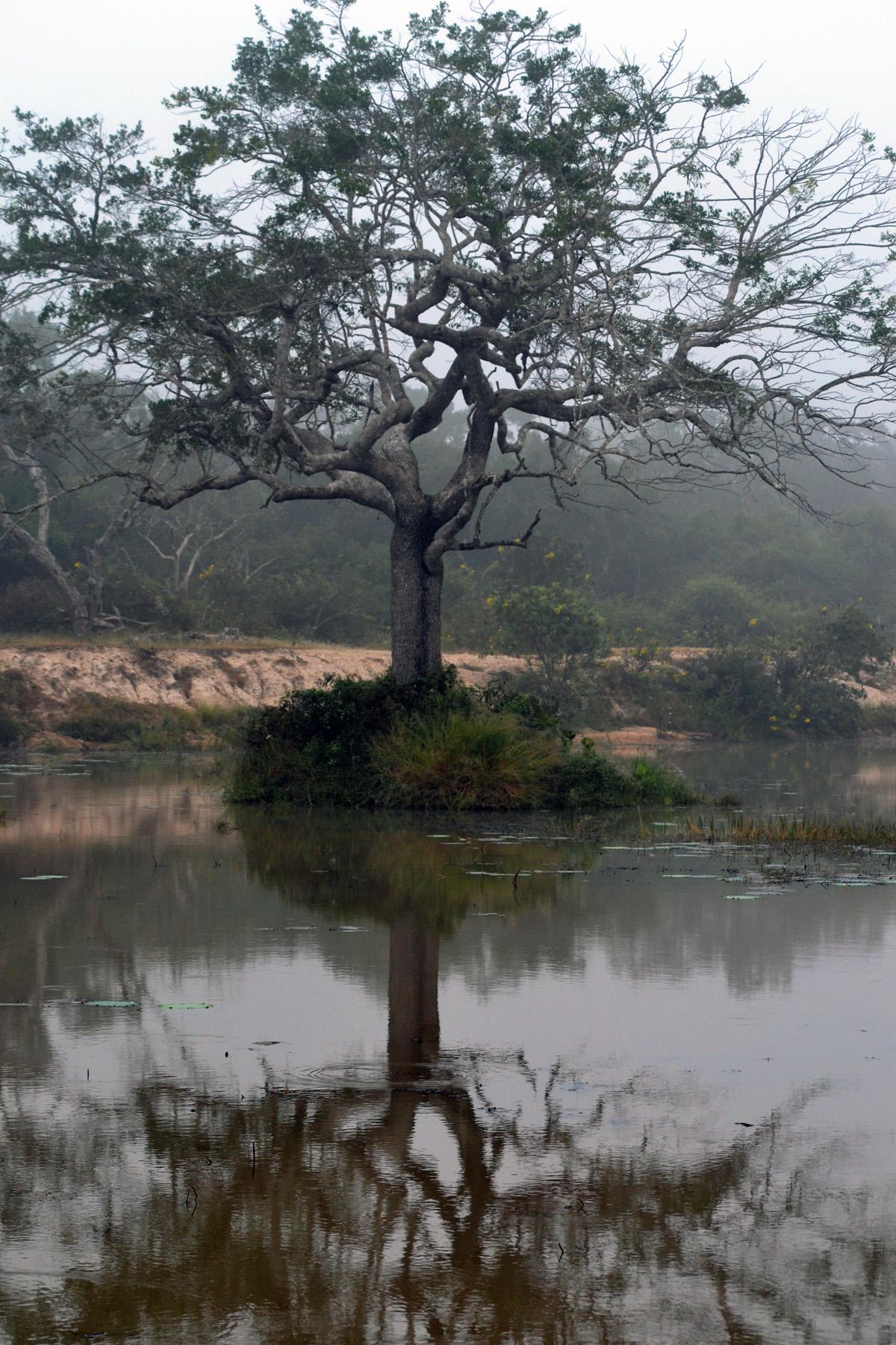 wilpattu safari