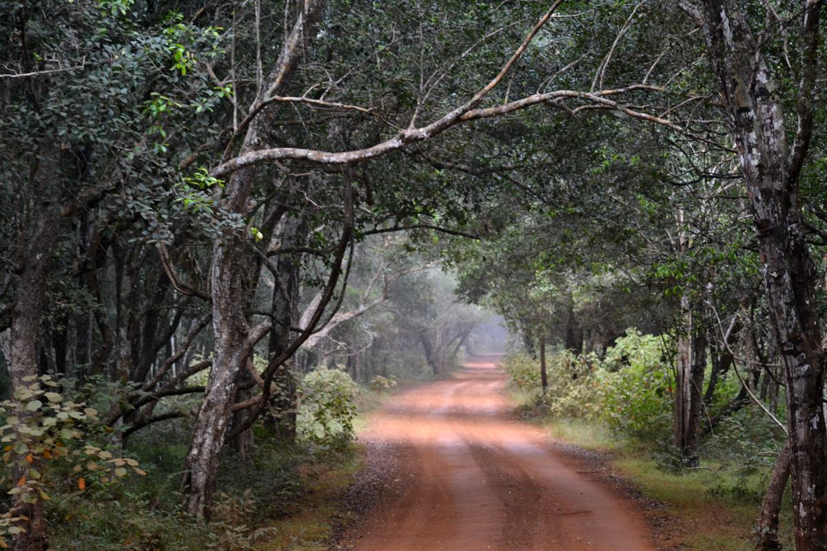 Safari i Wilpattu nationalpark