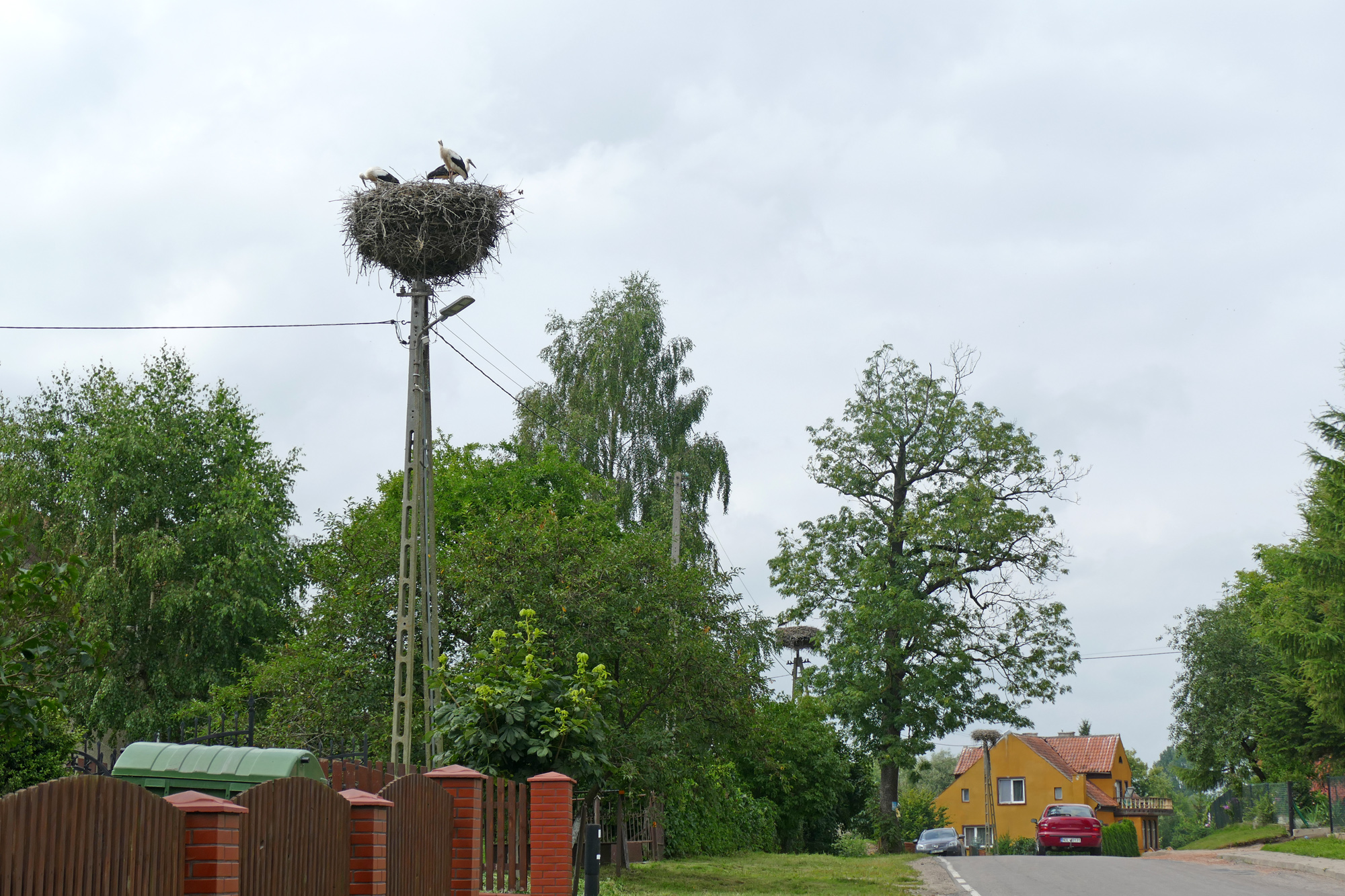 Storkar på pinne i norra Polen