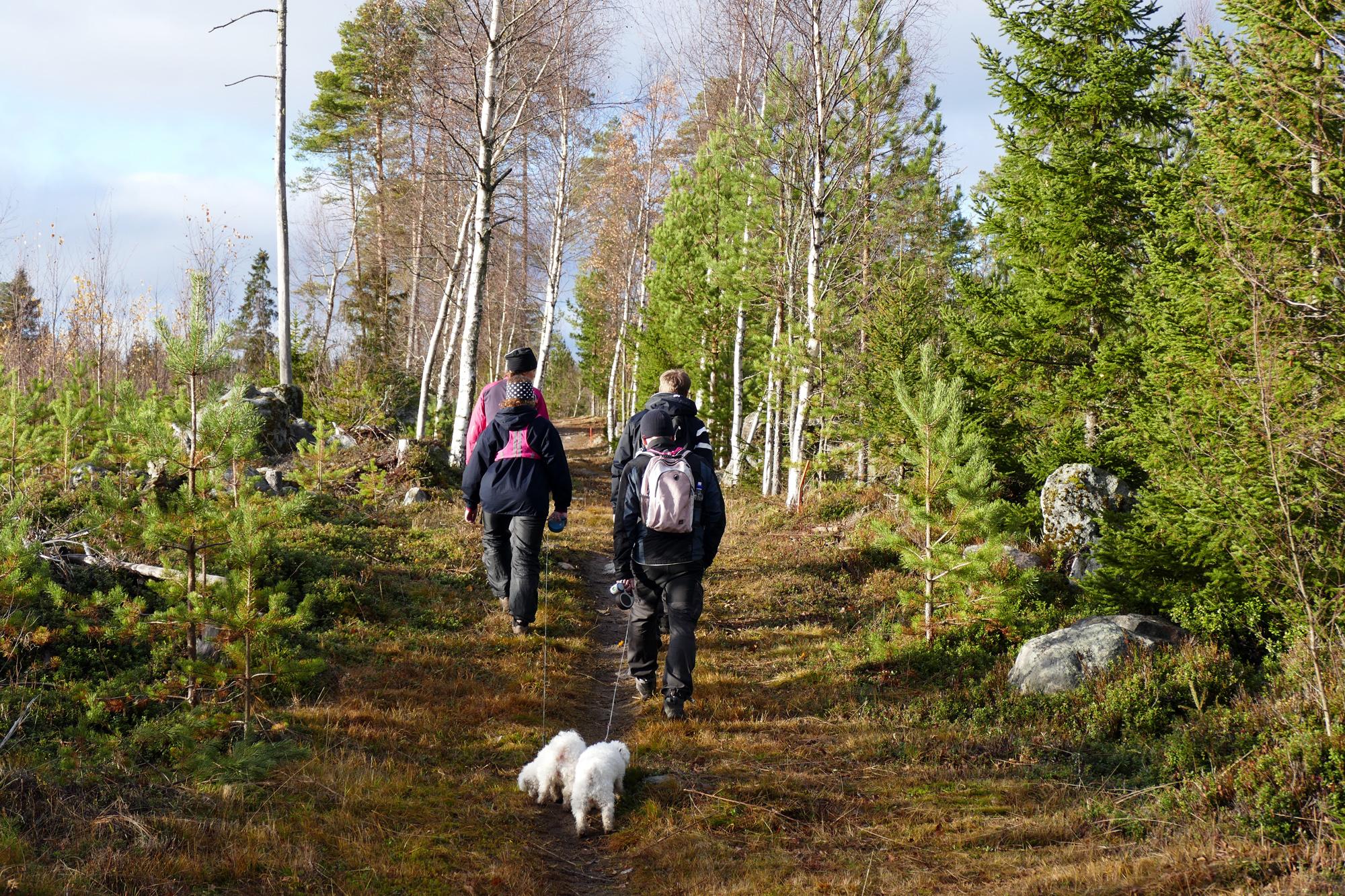 skogspromenad4