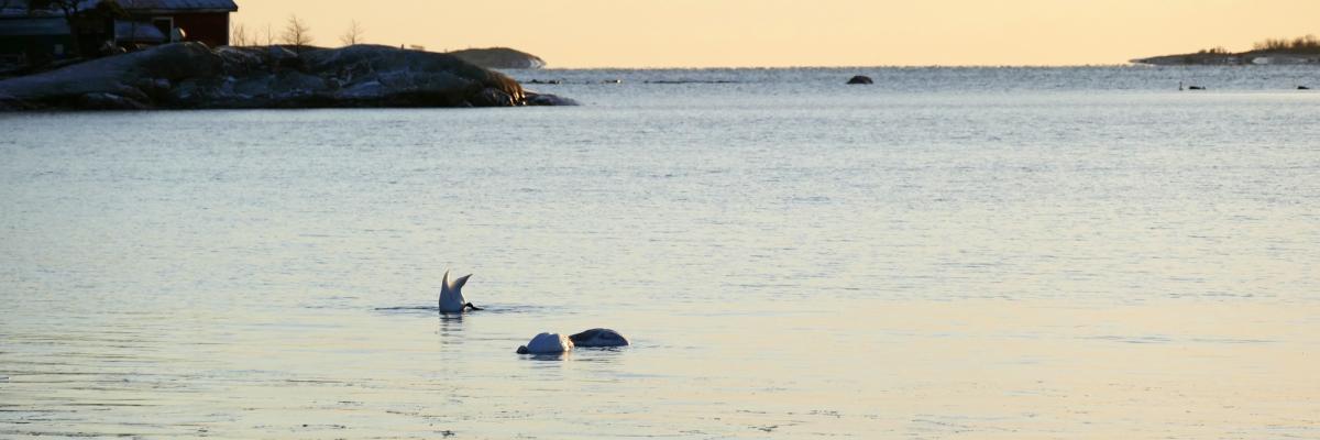 Helsingfors VS Jakobstad – inför flytten