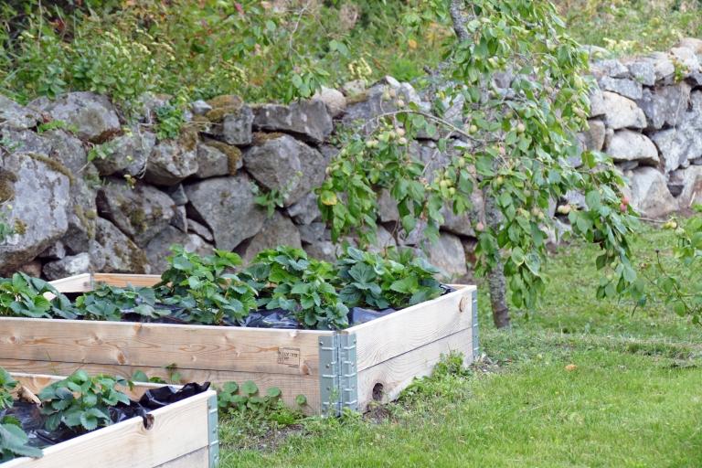 Vår trädgård: före- och efterbilder