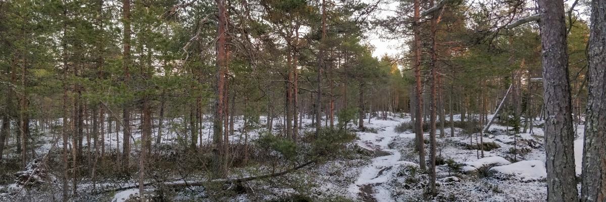Självständighetsdag med spring i skogen