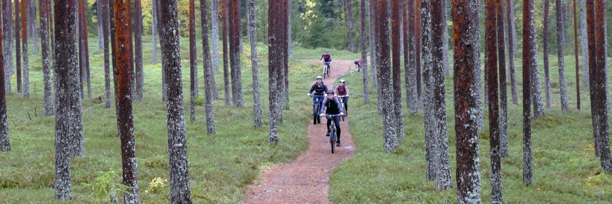 På mountainbike i Kalajoki – 20 km skogsrunda på fina stigar